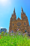 Flowers and St Mary's Cathedral in Hyde Park Royalty Free Stock Photo