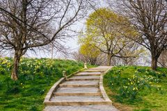 Flowers and stairs at Patterson Park, in Baltimore, Maryland.  royalty free stock photos