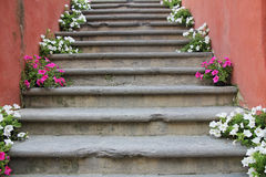 Flowers on stairs Royalty Free Stock Images