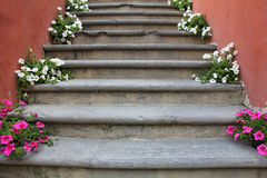 Flowers on stairs Stock Image