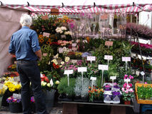 Flowers stall in Market. Flower stall display in Londonmarket stock photography