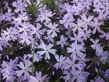 Flowers-stars royalty free stock image