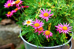 Flowers in steel pot. Colored flowers in steel pot Royalty Free Stock Photos