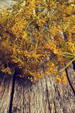 Flowers and stems of dill Royalty Free Stock Photography