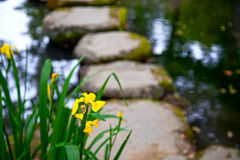 Flowers and Stepping Stones. Flowers beside a pond and stepping stones at the ancient iron smelting facility in Nirayama on the Izu Peninsula in Shizuoka Royalty Free Stock Photo