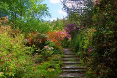 Flowers and steps Royalty Free Stock Photo