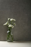 Flowers still life in concrete interior Stock Photos
