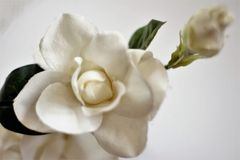 FLOWERS. Still life, white flower photography n Royalty Free Stock Photography
