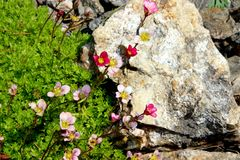 The flowers on stone and green backgrounds royalty free stock photo