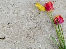 Flowers on a stone slab Stock Images