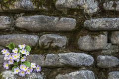 Flowers in stone. stock photo