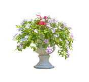 Flowers in stone vase Royalty Free Stock Photos