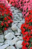 Flowers and stones. Gray road of stones between flowers Royalty Free Stock Photo