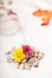Flowers and stones Royalty Free Stock Photography