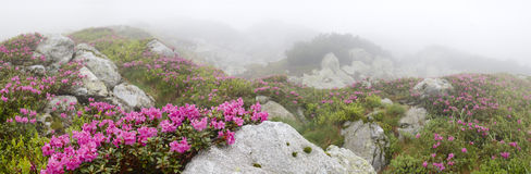 Flowers among the stones Royalty Free Stock Images