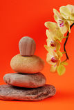 Flowers and stones. Orchid flowers and stones on backround Stock Photography