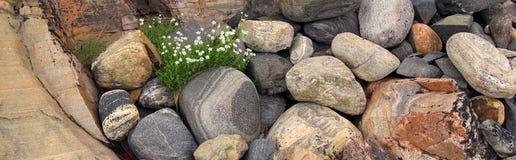 Flowers in stones Stock Photos