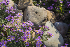 Flowers between the stones. Closeup photo of flowers between the stones Stock Photography
