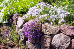 Flowers and stones in garden on alpine slide Royalty Free Stock Photography