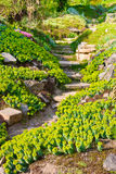 Flowers and stones in garden on alpine slide Stock Image