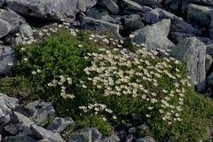Flowers in stones. Stock Image