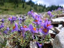 Flowers between stones Royalty Free Stock Image