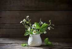 Flowers of strawberry in vase Royalty Free Stock Image
