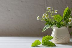 Flowers of strawberry in vase on old background Royalty Free Stock Image