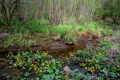 Flowers by the stream. Blooming yellow flowers on the banks of a stream in the forest stock photo