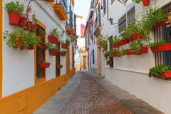 Flowers on street Cordoba, Andalusia, Spain Stock Photography