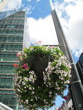 Flowers in the Street, London Stock Photography