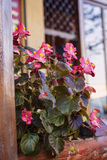 Flowers on a street. Some nice flowers on a street Stock Photos