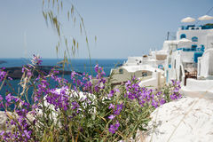 Flowers on the street of the white city. Santorini island, Greece. Small depth of sharpness Stock Photos