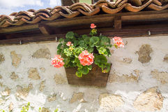 Flowers on the streets of Lovech, Bulgaria royalty free stock photo