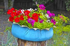 Flowers on a stump royalty free stock images