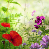 Flowers in the summer stock photography