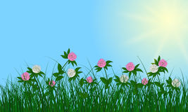 Flowers on summer background Stock Photo