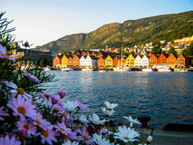 Flowers and summer in Bergen, Norway stock images