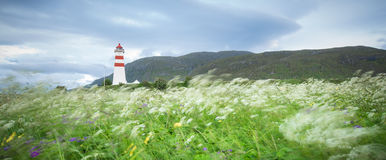 Flowers in summer breeze and Lighthouse Royalty Free Stock Photos