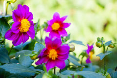 Flowers in summer garden Royalty Free Stock Images