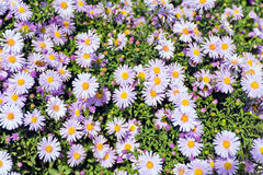 Flowers in summer Royalty Free Stock Photos