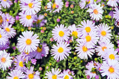 Flowers in summer Stock Image