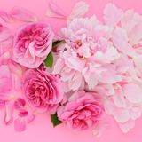 Flowers of Summer royalty free stock image