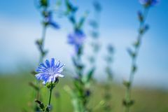 Flowers summer South field Royalty Free Stock Photo