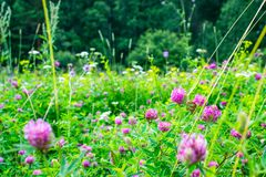 Flowers summer South field Stock Photos