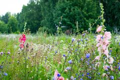 Flowers summer South field. Amazing color love Stock Images