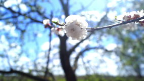 Flowers summer spring sun. Spring blossom over sunset sky. Beautiful nature scene stock video footage