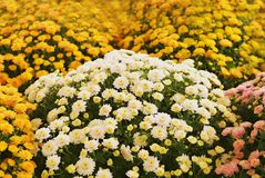 Flowers in summer Stock Photo