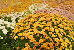 Flowers in summer Royalty Free Stock Image