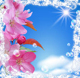 Flowers and sun Royalty Free Stock Photo